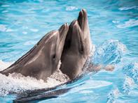 Five_fascinating_animal_language_facts_21-8-14_05-06-01.jpg
